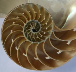 Fibonacci skaičių seka gamtoje