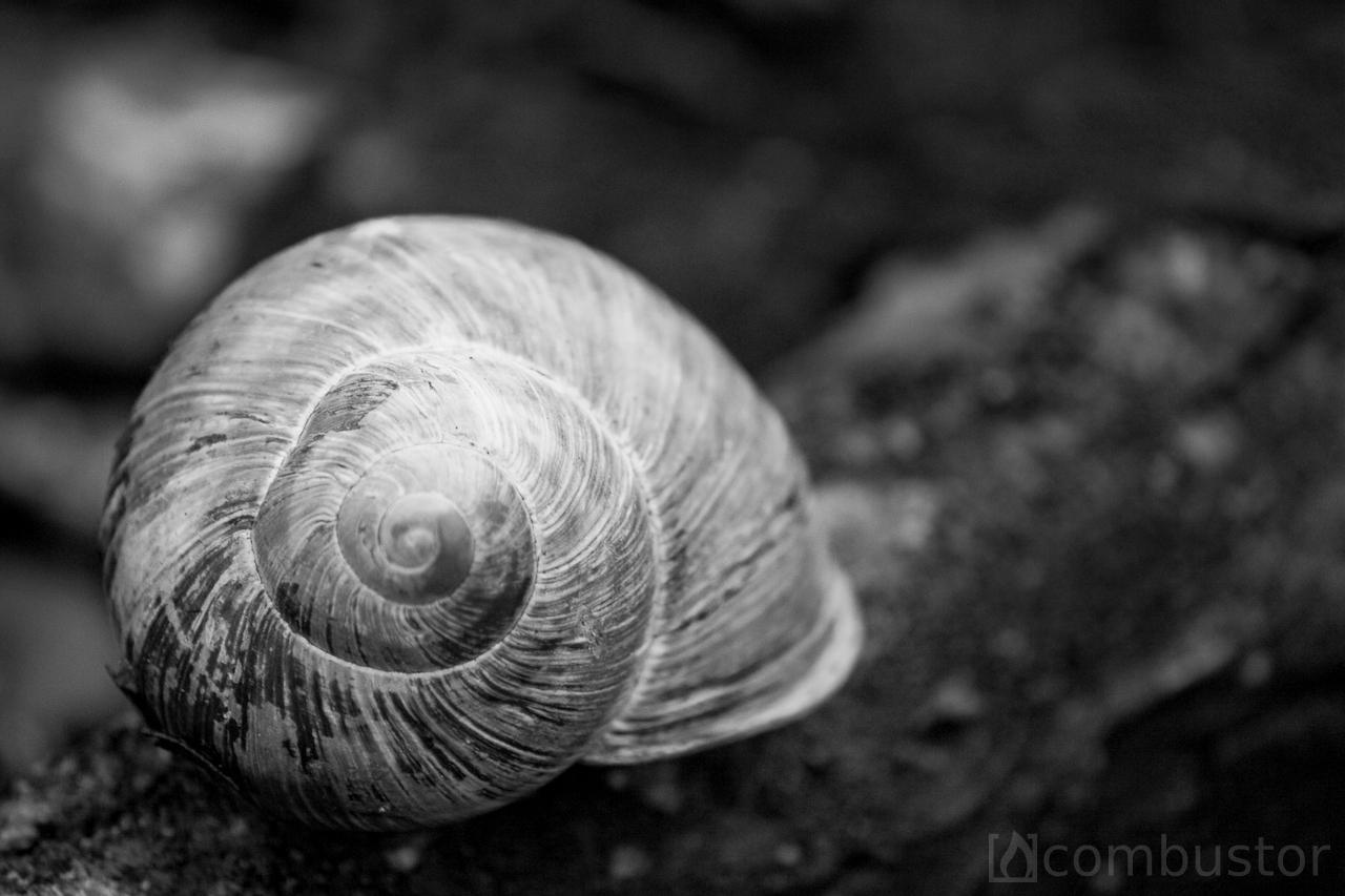Fibonacci skaičių seka gyvenime